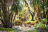 Path leading through bromeliads and palm trees in exotic garden