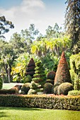 Topiary box garden in front of forest of palm trees