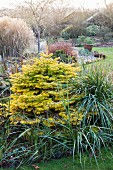 Small conifer in well-tended wintry garden