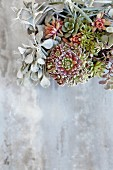 Various succulents in planter on grey surface