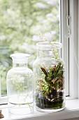 Zwei Apothekergläser mit Pflanzen auf Fenstersims