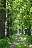 Feldweg gesäumt von Bäumen