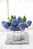 Blue hyacinths in silver jelly mould