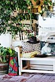 Ficus im Kübel und Gartenbank mit Kissen vor einem Schaufenster