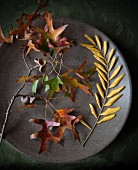 Autumn leaves and acorn cups on plate