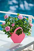 Potted rose in pink heart-shaped planter