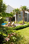 Palm trees, pool and sun loungers in garden outside modern house