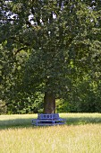 Blue semi-circular bench around trunk of tree in meadow