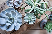 Various succulents on top of old wooden crates