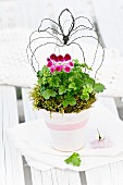 Geranium arranged with wire crown in white-painted terracotta pot