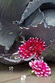 Silvery-grey red cabbage, glass prisms and red-and-white dahlias