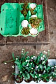Easter arrangement of green egg box, moss and egg shells