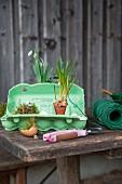 Easter arrangement of green egg box, moss and grape hyacinths