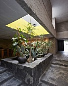 Bed of plants below light well with yellow interior in concrete house