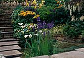Lilium, Iris, Lupinus, Astilbe, Acer, Carex, Fern