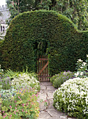 Taxus baccata cut as archway