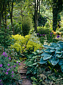 Path with Hosta, Geranium and Alchemilla mollis