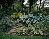 Hosta hybrids, ferns, geranium and alchemilla