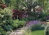 Shadow garden with Nepeta, Polygonum bistorta