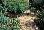 Marbled garden