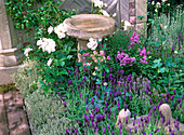 Flowerbed with thymus (thyme) as bedding border, pink (rose)
