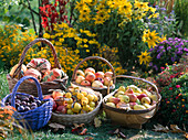 Baskets of apples, pears, plums, ornamental quinces, ornamental gourds