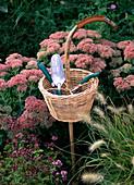 'Device basket as a work aid; Sedum telephium (Stonecrop)'