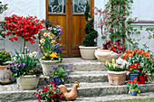 Spring in pots on stairs at the house entrance