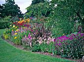 Perennial flowerbed, geranium, diascia