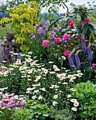 Iris sibirica, Chrysanthemum maximum