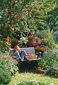 Autumnal garden with apple tree 'James Grieve'