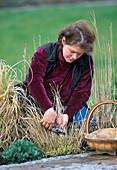 Cut back grasses in spring