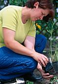Create a perennial flowerbed