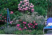 Rosary, Stem Rose 'Ballerina', Gypsophila 'Marisa'
