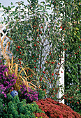 Perennial flowerbed in autumn in the 2nd year