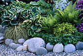 Shade bed with Hosta (funkie), Matteuccia