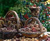 Still life with walnuts, hazelnuts, chestnuts, almonds and Brazil nuts
