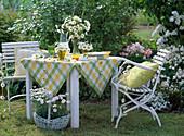 Leucanthemum and Argyranthemum (Marguerite) as a table decoration