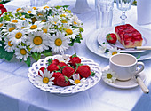 Leucanthemum (Marguerite, Alchemilla (lady's mantle), Fragaria
