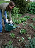 Plant perennial flowerbed