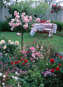 Rosa 'Bonica 82' (Rose) Trunks, Gaura (Glittering Candle)
