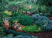 Herb Spiral, Origanum, Salvia (Sage)