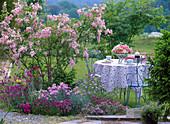 Syringa reflexa (ground lilac), Dianthus (carnation)