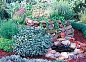 Herb Hill, Salvia (sage), Hyssopus (Hyssop)