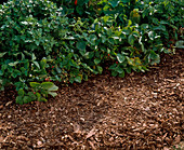Path with bark mulch
