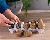 Propel potatoes in room