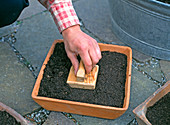 Firmly press sieved soil over the seed