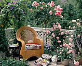 Pink roses on balcony, stem rose 'Piroschka'