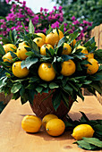 Lemon bouquet