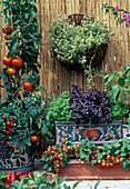 Tomatoes 'Carotina', 'Balcony Red'
